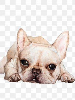 Cute Dog - French Bulldog Toy Bulldog Puppy Dog Breed PNG