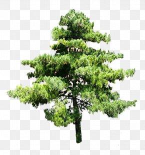 Trees - Tree Digital Image Clip Art PNG