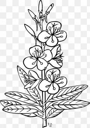 Free Plant Pictures - Plant Flower Leaf Clip Art PNG