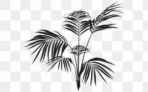 Leaf - Arecaceae Frond Palm Branch Black And White Leaf PNG