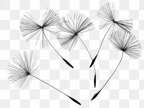 Dandelion Seeds - Common Dandelion Drawing Canvas Print PNG