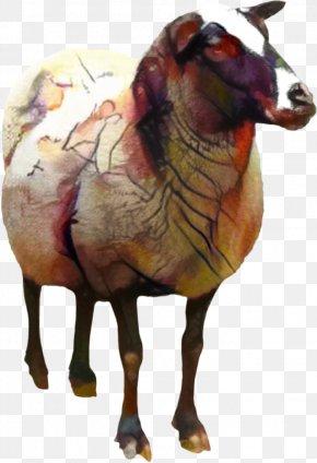 Pelibuey Sheep Clip Art Goat Desktop Wallpaper PNG