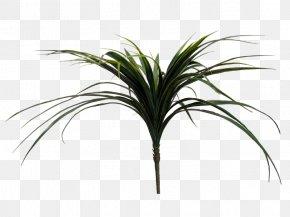 Leaf - Arecaceae Grasses Plant Stem Leaf Tree PNG