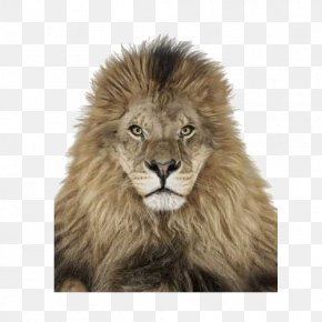 Lion Lion - Creature ABC Creature: 4 Floor Puzzles On This Earth Photographer PNG