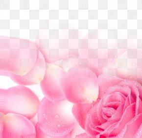 Pink Rose Petal Poster Background Network Valentine's Day - Garden Roses Pink Petal Wallpaper PNG