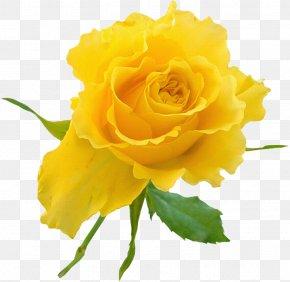 Yellow Rose - Garden Roses Yellow Flower Clip Art PNG