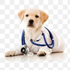 A Dog Doctor Wearing A Stethoscope - Dog Veterinarian Pet Clinique Vxe9txe9rinaire Health Care PNG