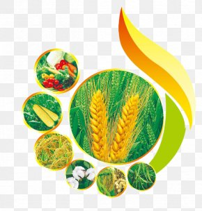 Wheat Creative Graphic Design - Graphic Design PNG
