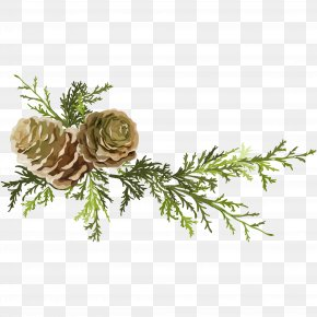 Pine Needles And Pine Cones - Pine Conifer Cone Leaf PNG