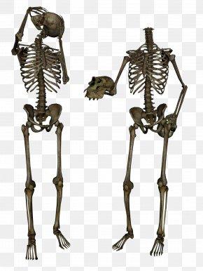Skeleton Image - Terminator Skeleton PNG