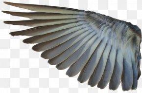 Wings - Bird Mallard Wing Photography Desktop Wallpaper PNG