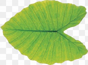 Leaf - Leaf Green Plant Pathology PNG