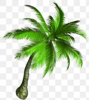Coconut Tree - Asian Palmyra Palm Coconut Tree PNG