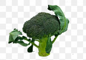 Leafy Broccoli - Broccoli Sprouts Leaf Vegetable PNG