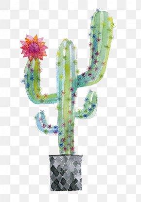 Cactus - Cactaceae Watercolor Painting Succulent Plant Illustration PNG