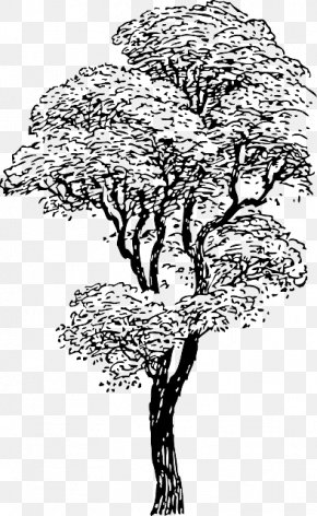 Outline Of A Tree Drawing - Tree Drawing Clip Art PNG