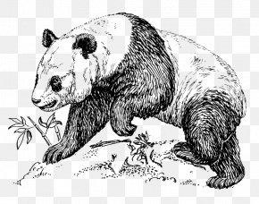 Giant Panda Bear Baby Pandas Clip ArtCute Panda - Giant Panda Bear Drawing Tarepanda PNG