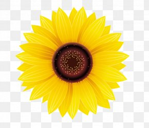 Sunflower - Common Sunflower Sticker Decal Yellow PNG