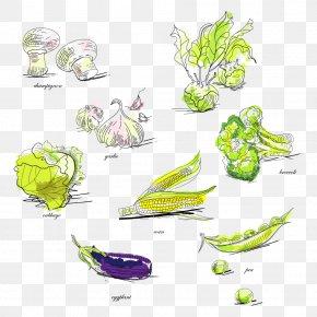 Vegetables - Vegetable Broccoli Pea Illustration PNG