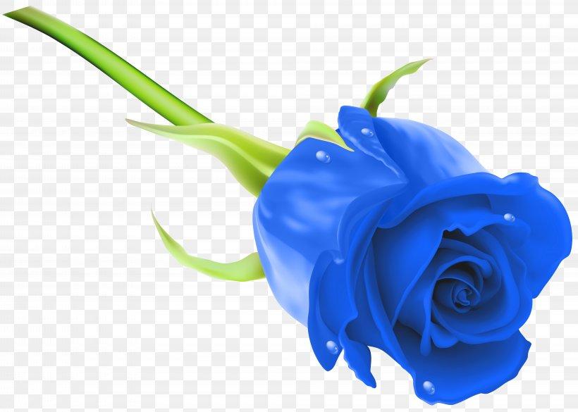 Blue Rose Flower Stock Photography Clip Art, PNG, 8000x5710px, Rose, Blue, Blue Rose, Close Up, Cobalt Blue Download Free
