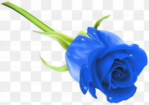 Blue Rose Clip Art Image - Blue Rose Flower Stock Photography Clip Art PNG