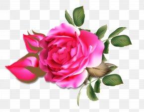 Peony - Garden Roses Rosa Chinensis Centifolia Roses PNG