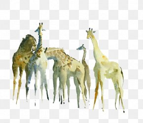 Hand Painted Giraffe - Northern Giraffe Watercolor Painting Drawing PNG
