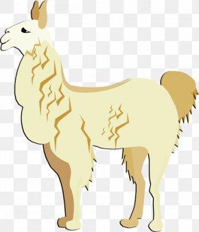 Llama Cliparts - Llama Alpaca Free Content Clip Art PNG
