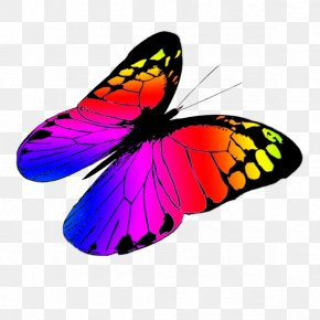 Greenish Cliparts - Butterfly Color Clip Art PNG