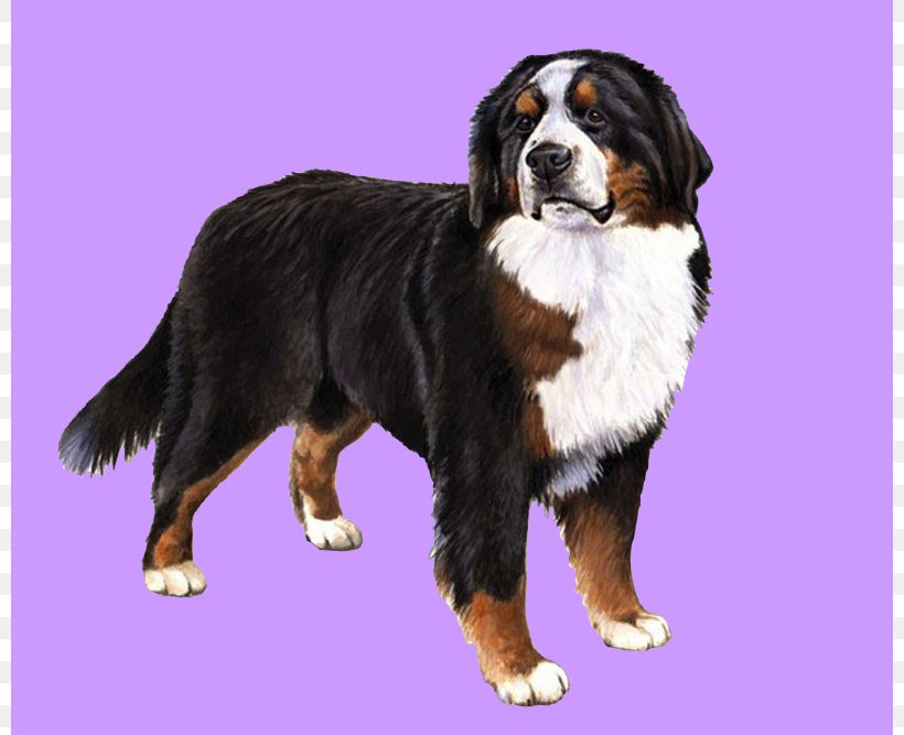 The Bernese Mountain Dog Great Pyrenees Puppy Png