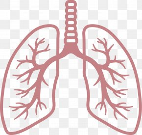 Lungs - Lung Respiratory System Respiratory Disease Breathing PNG