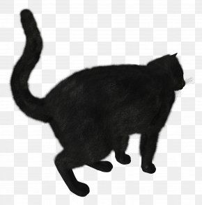 Black Cat Image - Black Cat Track PNG