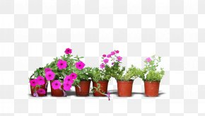 Real Flower Pots PNG