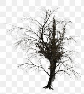 Tree - Tree Branch Trunk Image PNG
