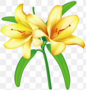 Yellow Lilium Clipart Picture - Flower Yellow Clip Art PNG
