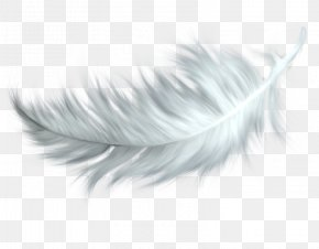 Feather - Feather Bird Clip Art PNG