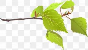 Big Leaves Cliparts - Branch Leaf Tree Clip Art PNG