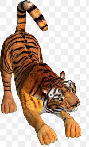 Tiger - Tiger Lion Wildcat Felidae PNG