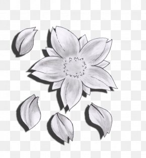 Drawing Flower - Flower Drawing Cherry Blossom Sketch PNG