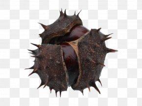 Seeds - Organism PNG