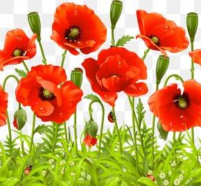 Vector A Poppy Flower - Remembrance Poppy Flower Common Poppy PNG