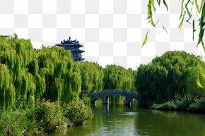 Daming Lake, Jinan High-resolution Images - Daming Lake Park Tourist Attraction Travel PNG