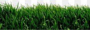 Trevor Cliparts - Lawn Ornamental Grass Clip Art PNG