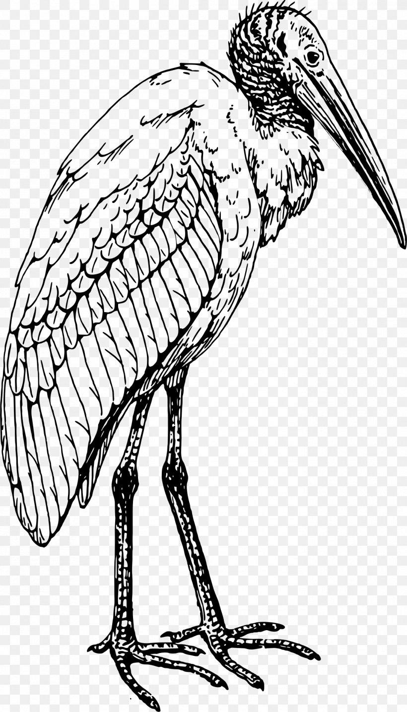 Bird Coloring Book Ibis Drawing Stork Png 1371x2400px Bird American White Ibis Artwork Beak Black And