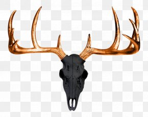 Antlers - White-tailed Deer Antler Wall Decal Skull PNG