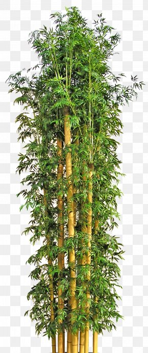 Tree - Tree Bamboo Flowerpot PNG