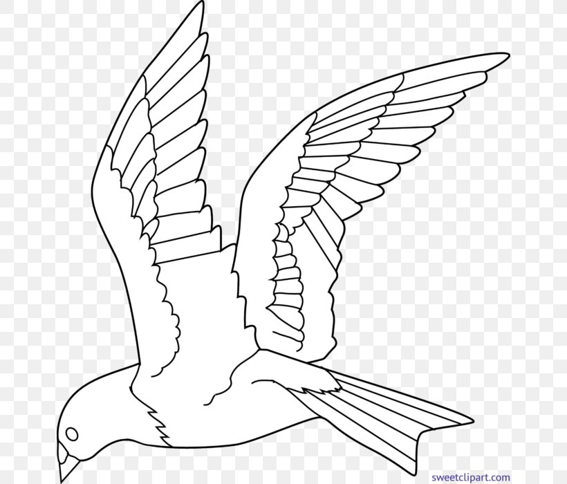 Birds Coloring Pages For Preschool | 700x820