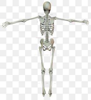 Human Skeleton - Human Skeleton Crucifix Cross PNG
