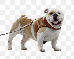 Bulldog - Toy Bulldog Olde English Bulldogge Old English Bulldog Sony Xperia Z3+ PNG