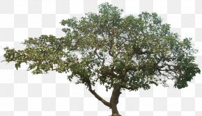 Jenis Pohon - Tree Data Compression PNG